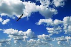 Pássaro e céu imagem de stock