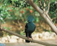 Pássaro e filial Imagens de Stock Royalty Free
