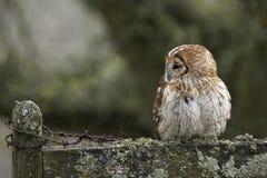 Pássaro e fio Fotografia de Stock