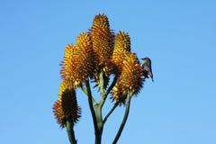 Pássaro e flor Fotos de Stock
