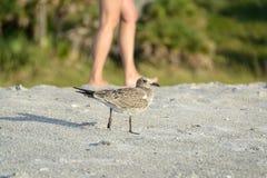 Pássaro e jovem mulher que andam na praia Foto de Stock Royalty Free