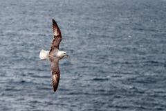 Pássaro e mar Foto de Stock Royalty Free