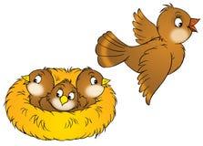 Pássaro e nestlings ilustração stock