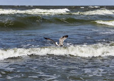 Pássaro e o mar Foto de Stock
