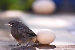 Pássaro e ovo pequenos Imagens de Stock