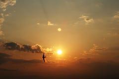 Pássaro e pôr do sol Imagens de Stock Royalty Free