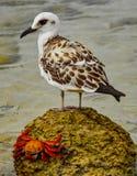 Pássaro e Sally de costa foto de stock royalty free