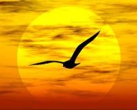 Pássaro e sol Imagens de Stock