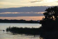 Pássaro e vegetação pelo rio no por do sol Imagens de Stock