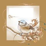 Pássaro em branco do cartão Imagem de Stock