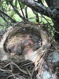 Pássaro em cores diferentes Fotografia de Stock