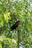 Pássaro em Illinois foto de stock