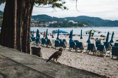 Pássaro em Kata Beach no por do sol na ilha de Phuket, Tailândia imagens de stock
