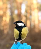 Pássaro em minha mão Foto de Stock