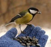 Pássaro em minha mão Fotografia de Stock Royalty Free
