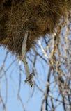 Pássaro em Namíbia imagem de stock