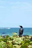 Pássaro em plantas Fotos de Stock Royalty Free