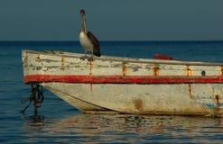 Pássaro em um barco de pesca Foto de Stock