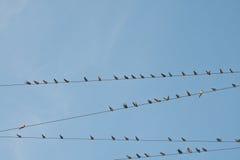 Pássaro em um cabo de fio Fotos de Stock Royalty Free