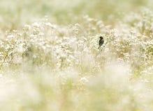 Pássaro em um campo de flor Foto de Stock
