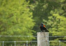 Pássaro em um cargo Foto de Stock