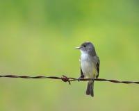 Pássaro em um fio Imagem de Stock