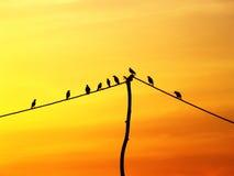 Pássaro em um fio Fotografia de Stock Royalty Free