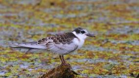 Pássaro em um lago vídeos de arquivo