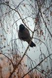 Pássaro em um ramo Foto de Stock