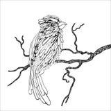 Pássaro em um ramo ilustração stock