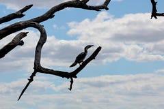 Pássaro em um ramo grande Fotografia de Stock Royalty Free