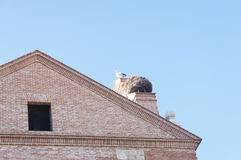 Pássaro em um telhado Imagens de Stock