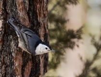 Pássaro em um tronco de árvore Imagens de Stock