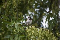 Pássaro em uma árvore 1 foto de stock