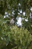 Pássaro em uma árvore 2 imagem de stock royalty free