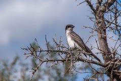Pássaro em uma árvore Foto de Stock Royalty Free