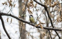 Pássaro em uma árvore Fotografia de Stock Royalty Free