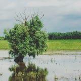 Pássaro em uma árvore Imagem de Stock