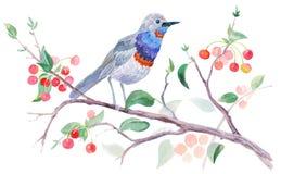 pássaro em uma árvore de cereja ilustração stock