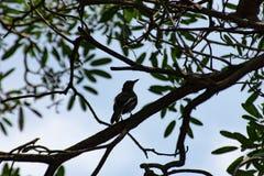 Pássaro em uma árvore no jardim imagens de stock