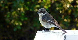 Pássaro em uma conversão de madeira Foto de Stock Royalty Free