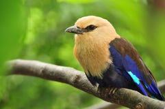 Pássaro em uma filial Imagem de Stock Royalty Free