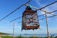 Pássaro em uma gaiola Fotografia de Stock Royalty Free