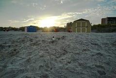 Pássaro em uma praia Imagem de Stock