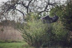 Pássaro empoleirado em um coto de árvore imagem de stock