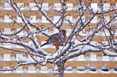 Pássaro empoleirado na árvore coberto de neve Fotos de Stock Royalty Free