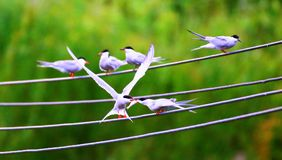 Pássaro encantador fotografia de stock