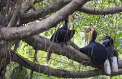 Pássaro envolvido do Hornbill imagens de stock