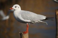 Pássaro ereto Imagem de Stock Royalty Free