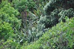 Pássaro escondido em um mar do verde Fotos de Stock